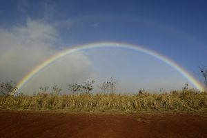 Double rainbow over a field in Maui, Hawaii