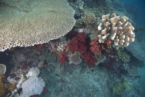 Healthy corals cover a reef in Beqa Lagoon, Fiji