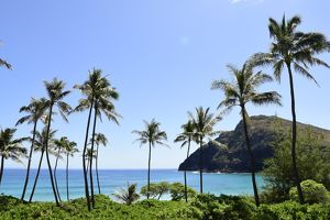 Palm trees along the coast of Waimanalo Bay, Oahu, Hawaii